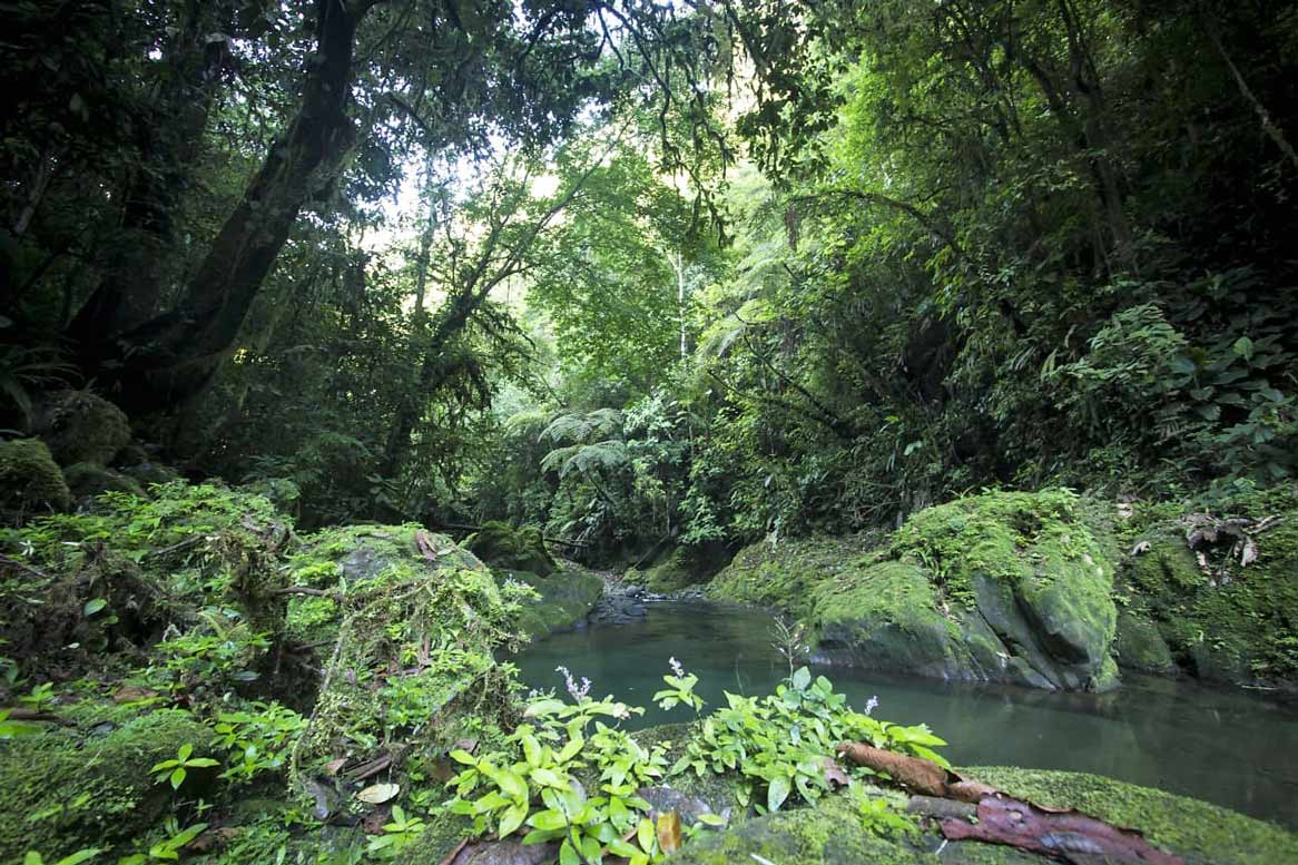 Internship and research in the rainforest of Costa Rica
